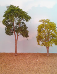 blue gum tree (1006)