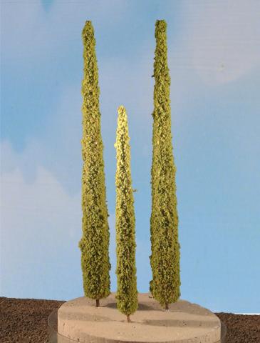 cypress trees 1013